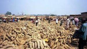 Le Nigéria va exporter de l'igname vers les USA et le Royaume-Uni